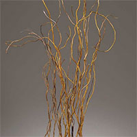 Curly Willow Branches - Natural