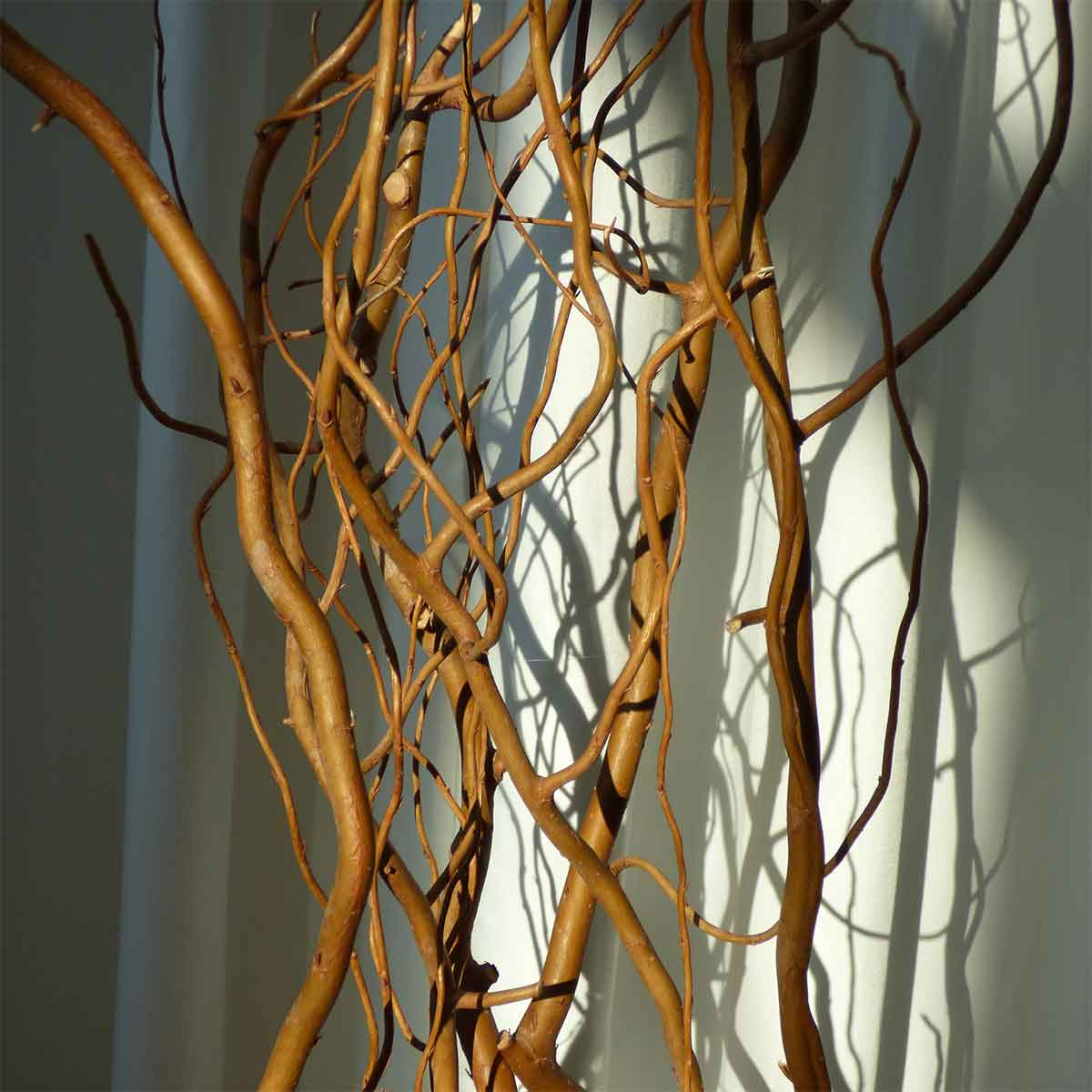 Deluxe Dried Curly Willow Branches