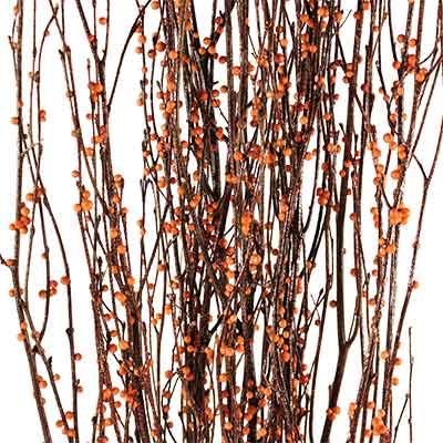 decorative branches bittersweet birch branches