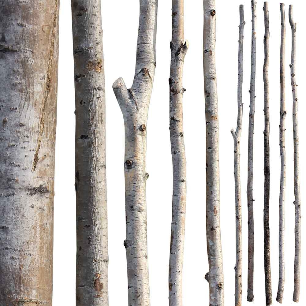 Preserving Tree Branches For Decoration Decorative Branches Aspen Poles