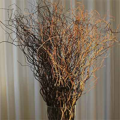Curly Willow Branches - Green - Bulk - Fresh