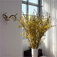 Forsythia Branches Bulk