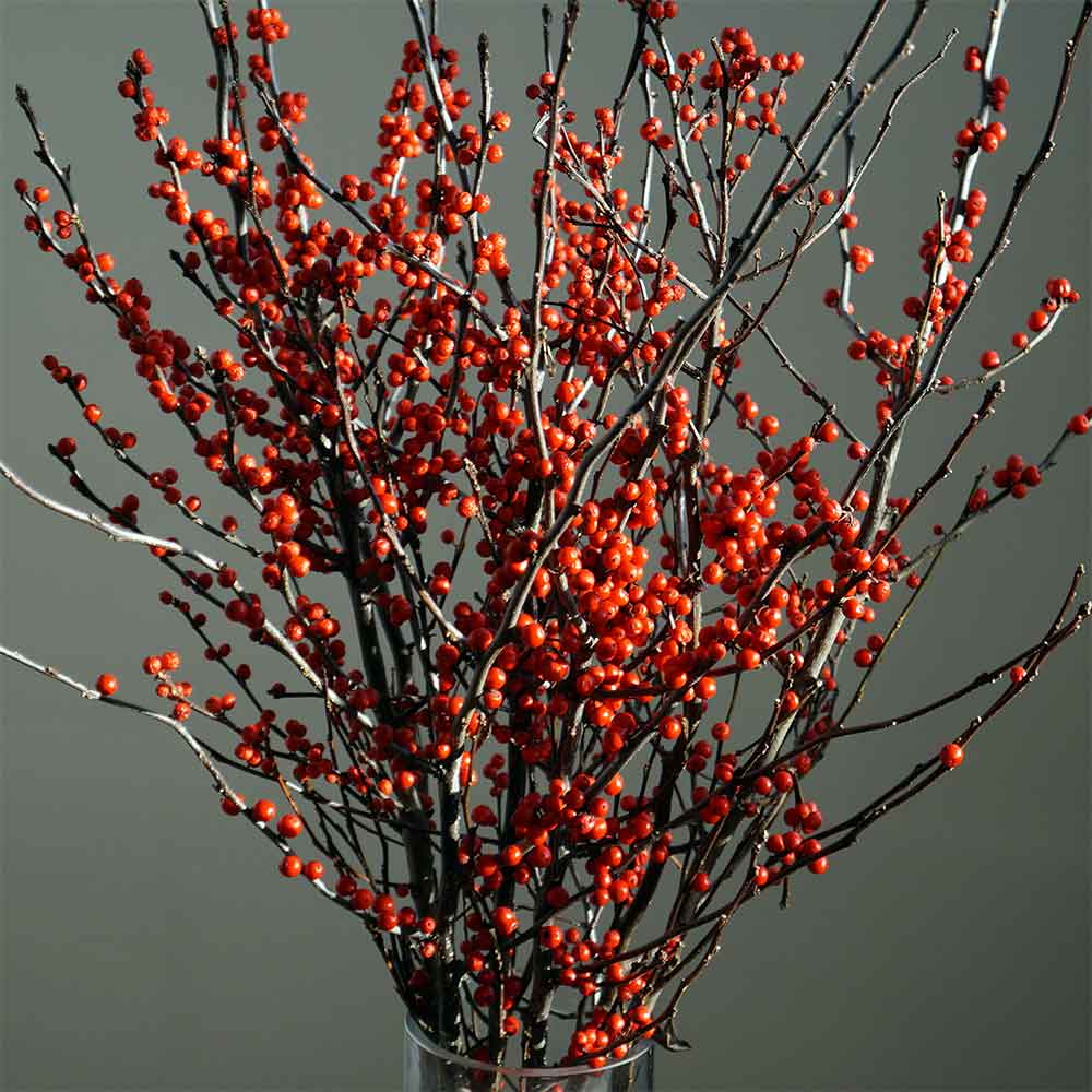 winterberry branches 18 24