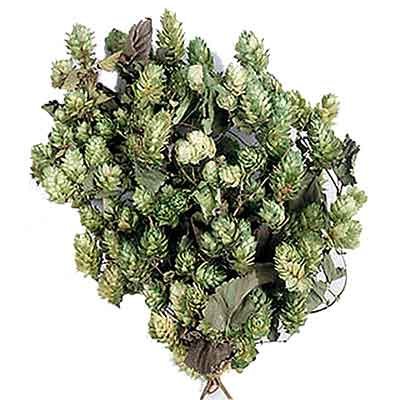 Preserved Decorative Hops - Green