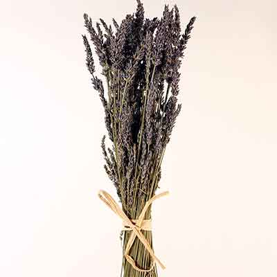 French Dried Lavender