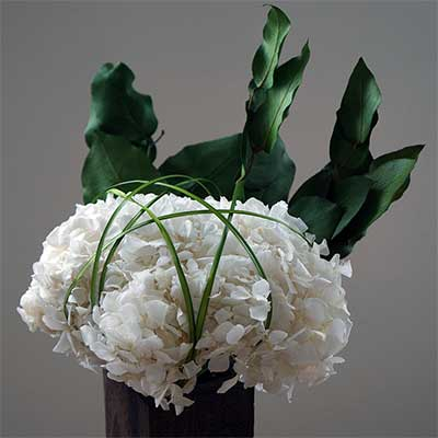 Preserved White Hydrangeas