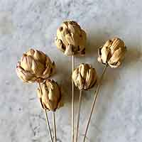 Dried Artichokes - Natural (Stemmed)
