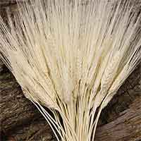 White Wheat Bunches