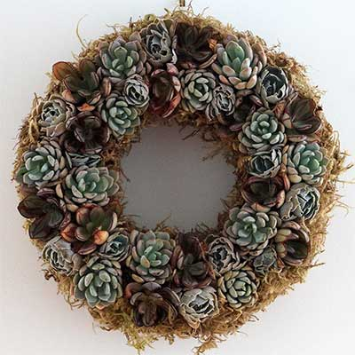 Succulent Wreath or Echeveria Wreath, 12""