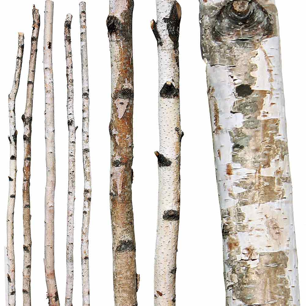 decorative branches paper birch poles
