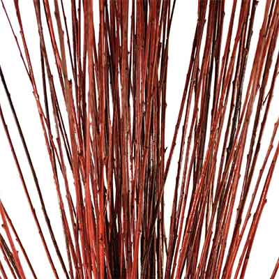 Brown Asian Willow Branches