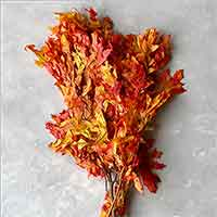 Preserved Oak Leaves, Autumn, 12 Pounds