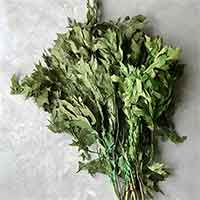 Preserved Oak Leaves, Spring Green, 12 Pounds
