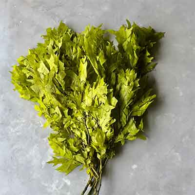 Preserved Oak Leaves, Chartreuse, 12 Pounds