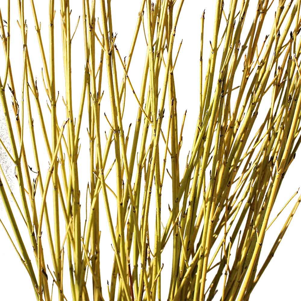 Decorative Sticks 28 Images New Bamboo Poles River