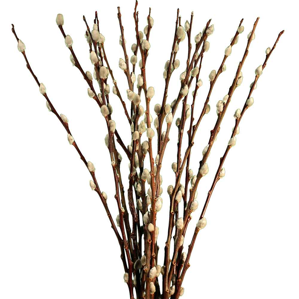 sweet types decoration grasses styles branches decor hollow other lasting botanicals flowers of offers nettleton green decorative berry pin many branch and dried huck
