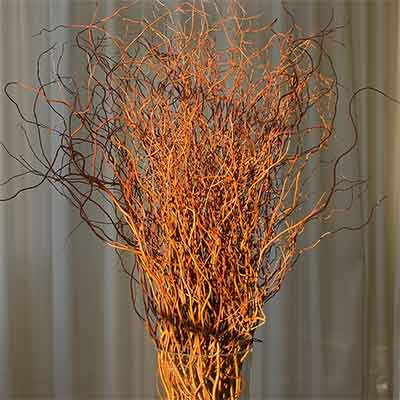 Curly Willow Branches - Red - Bulk - Fresh