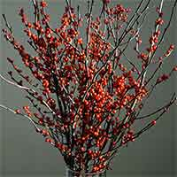 Winterberry Branches, 18-24""