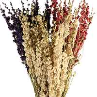 Dried Larkspur Flowers - White