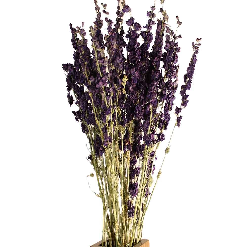 Dried Larkspur Flowers - Dark Blue