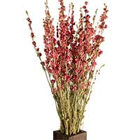 Dried Larkspur Flowers - Pink