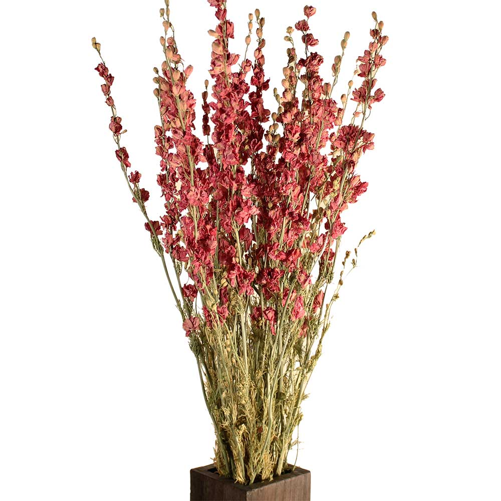 Dried Larkspur Flowers Pink
