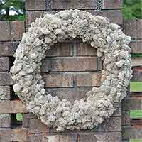 Reindeer Moss Wreath - Natural 21""