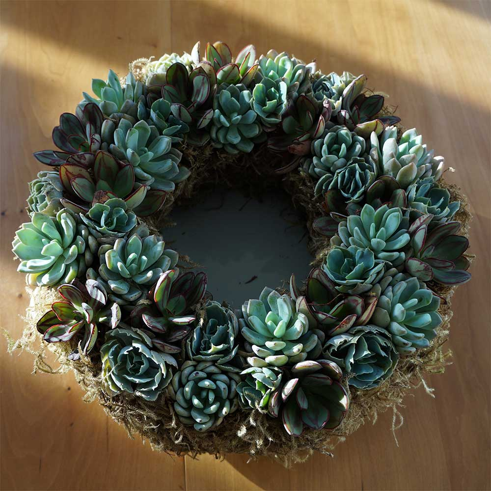 Living Succulent ...