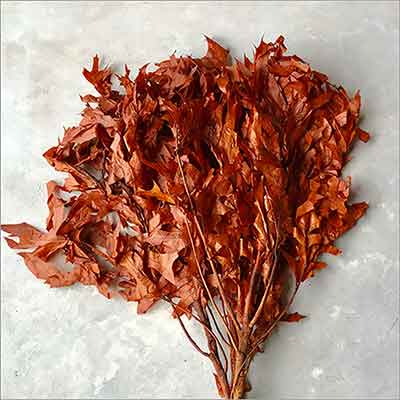 Preserved Oak Leaves, Rust, 12 Pounds