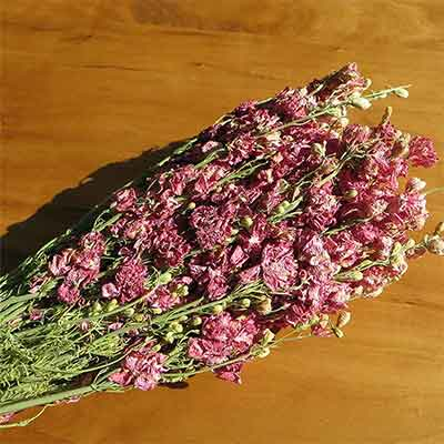 Dark Pink Dried Larkspur