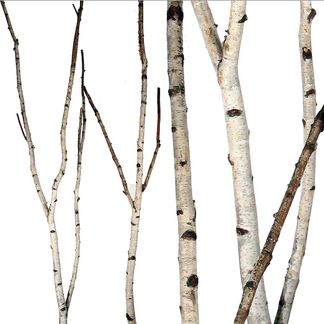 Preserving Tree Branches For Decoration Decorative Birch Branches