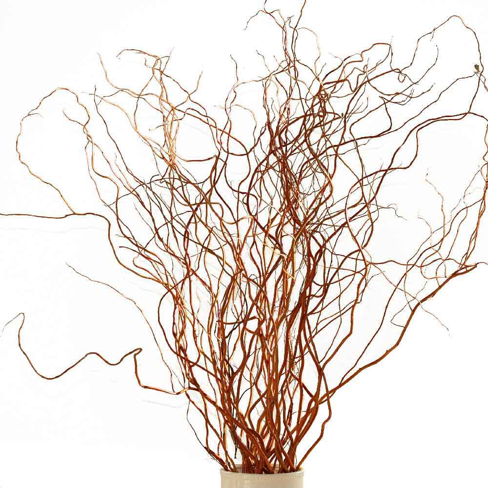 Red Curly Willow Branches - Fresh