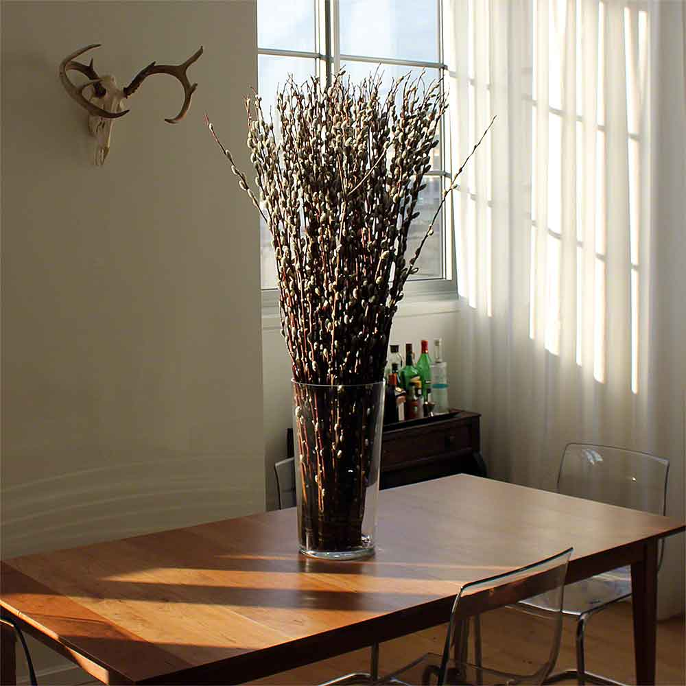 beautiful dogwood branches in large glass vase beautiful.htm giant pussy willow branches bulk  giant pussy willow branches bulk